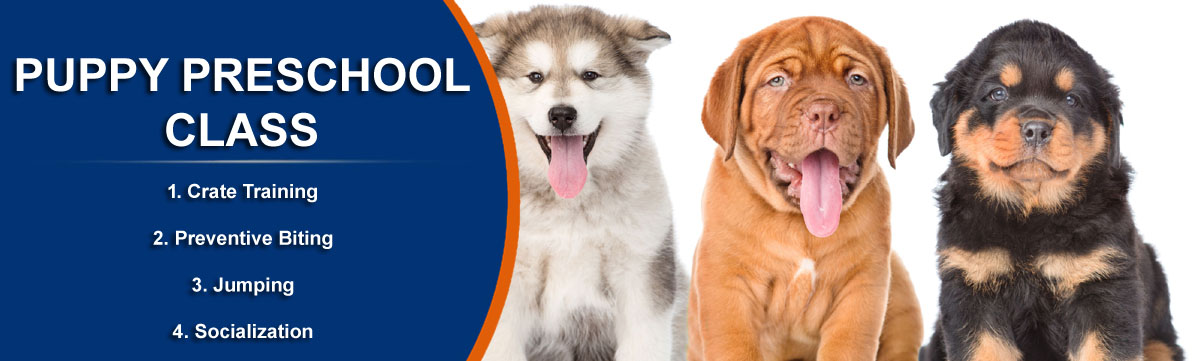 basic obedience dog training services