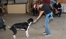 Prodogz Basic obedience dog training classes & Behavior Modification. Positive Reinforcement Dog Training Co.